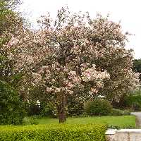 In the towns are many flowering plants and trees.